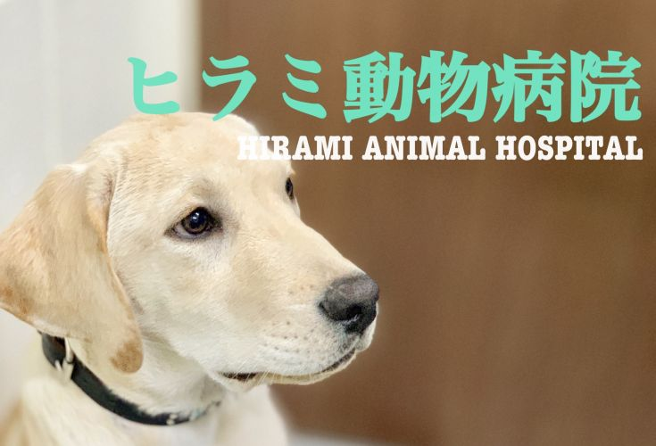 ヒラミ動物病院